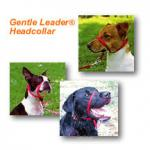 Gentle Leader Headcollar